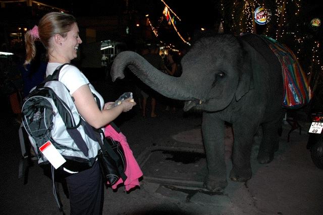 Kim feeding a baby elephant in Chiang Mai